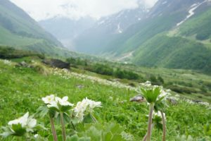 valley of flower trek
